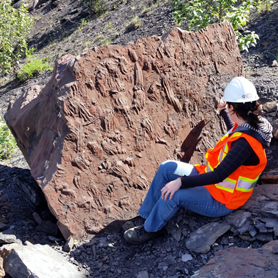 Fossils discovered in B.C. province, new regulations for mining companies put the fossils in Royal Museums and local history exhibits.