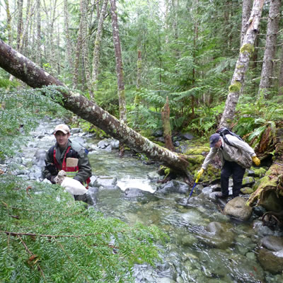 Two researchers are in a forest near a stream.