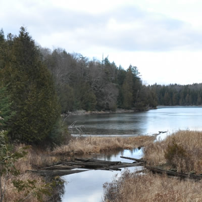 The La Loutre property, showing a lake shore with trees.