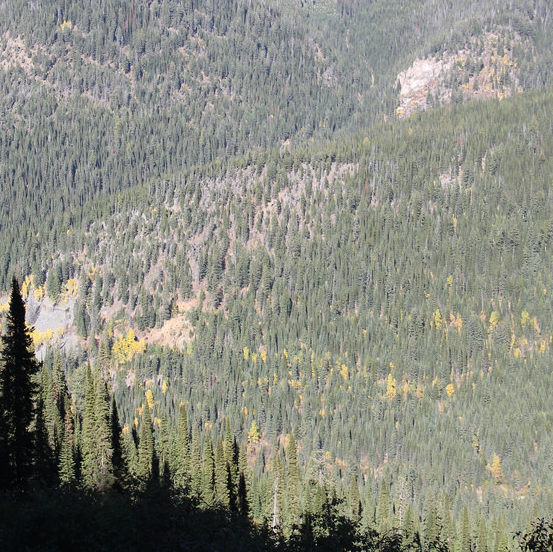 American Creek might have found the Wild Horse River motherlode on its Gold Hill property. Here's a photo of the forested mountainous terrain in the area.