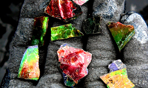 Ammolite is rainbow-coloured even in its raw form.