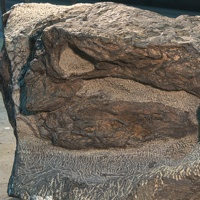 The oldest dinosaur found to date in Alberta is this 110-million-year old armoured dinosaur discovered in 2011 during routine mining operations at Suncor in Fort McMurray.