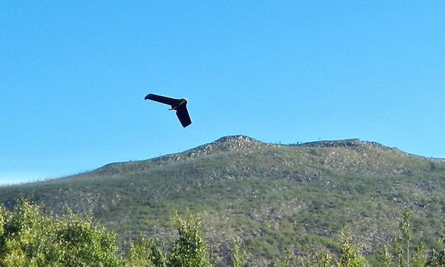 EBEE drone in flight.