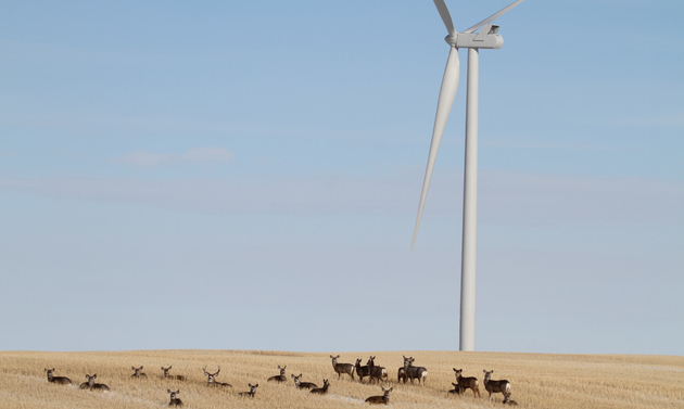 A wind turbine in a field with a herd of deer lounging in the grass around it.